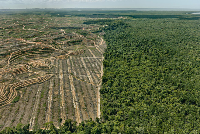 Clearcut #1, Palm Oil Plantation, Borneo, Malaysia 2016